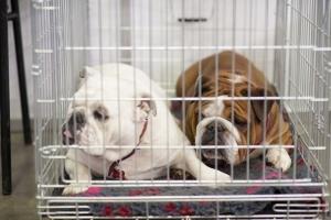 In der Regel sind Haustiere nicht von der Sachpfändung betroffen, aber es gibt Ausnahmefälle.